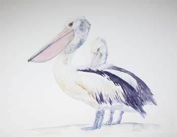 The-Pelicans